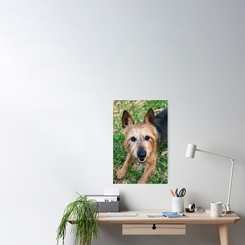 The Happy Terrier Poster