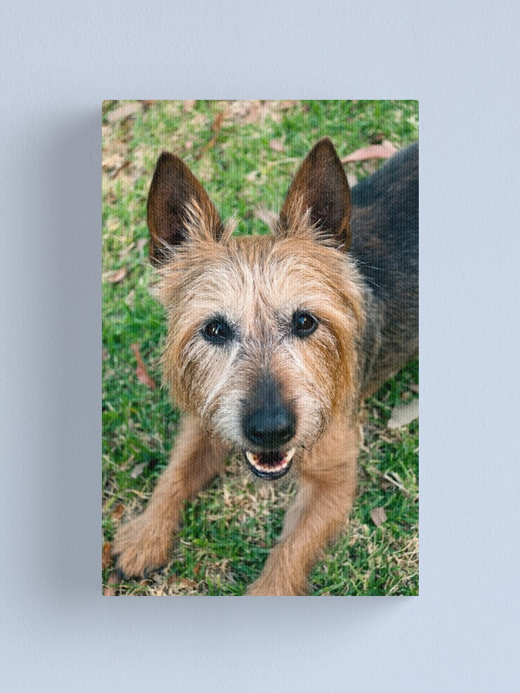 Alternate view of The Happy Terrier Canvas Print