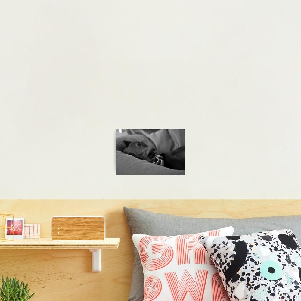 Blissful Sleep Photographic Print