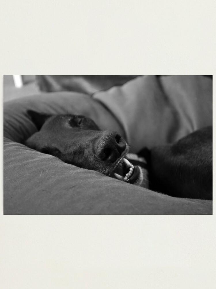 Alternate view of Blissful Sleep Photographic Print