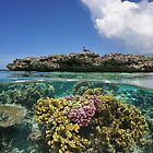 Corals underwater and reef islet with a seabird by Dam - www.seaphotoart.com