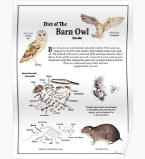 Diet of the Barn Owl Poster