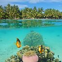 Tropical Islet With Anemone Fish Underwater Case Skin For Samsung Galaxy By Seaphotoart Redbubble