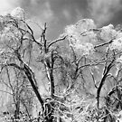 trees wear winter by blacqbook