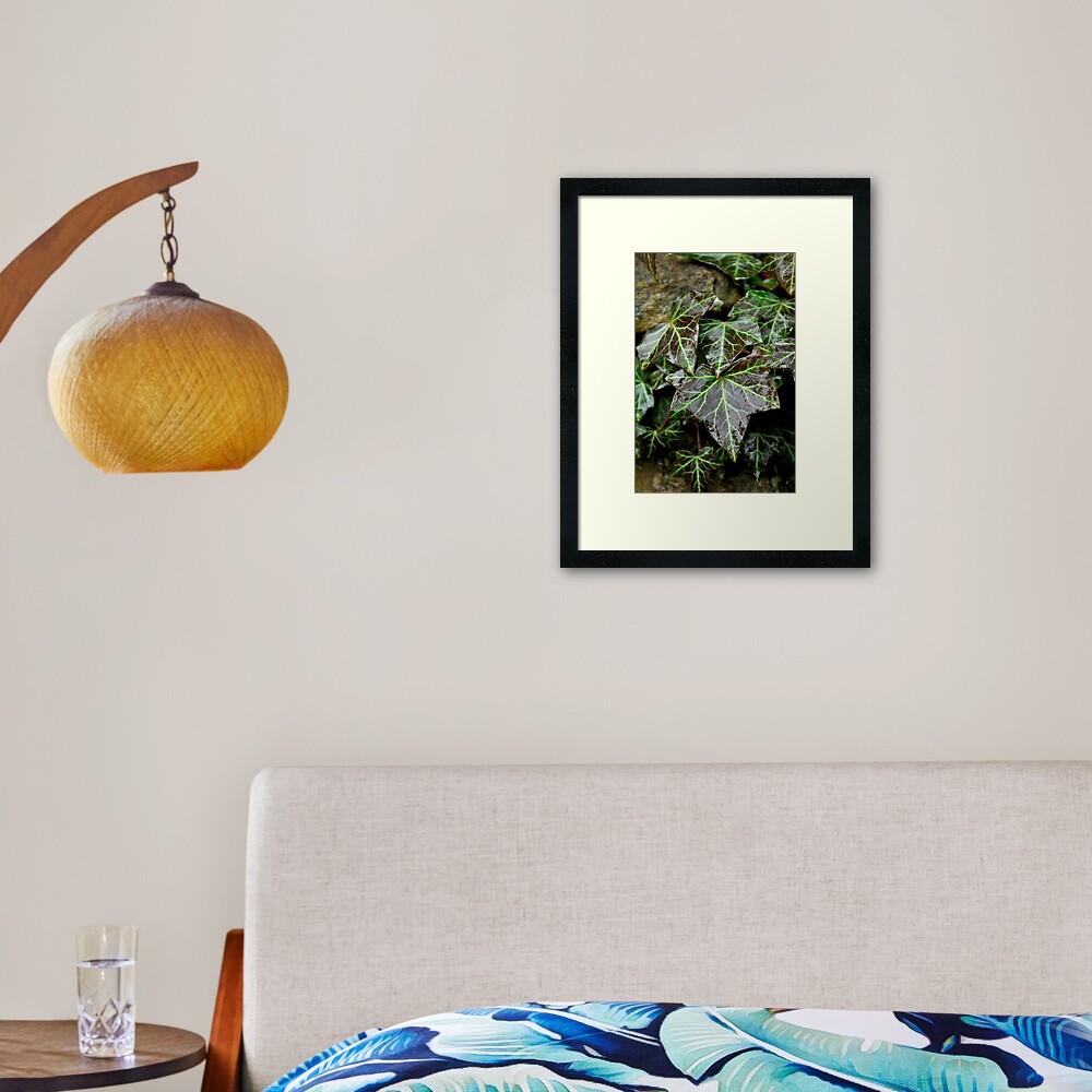 Glistening Ivy Framed Art Print