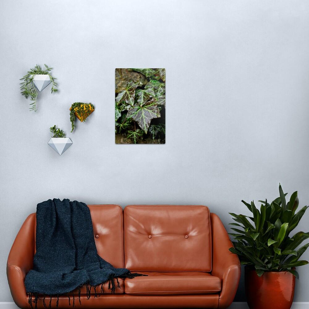 Glistening Ivy Metal Print