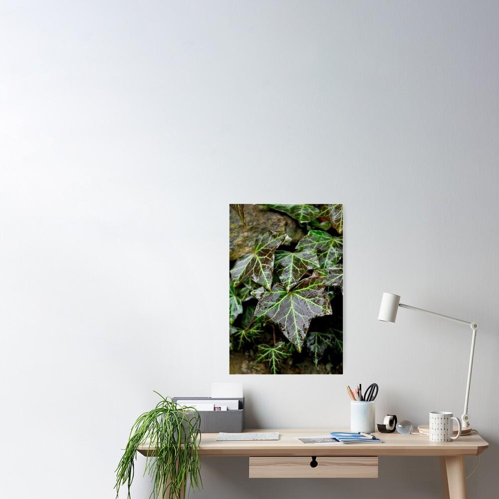 Glistening Ivy Poster