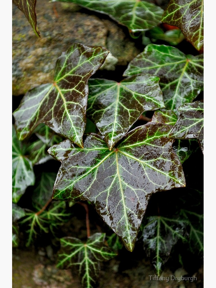 Glistening Ivy by Tiffany