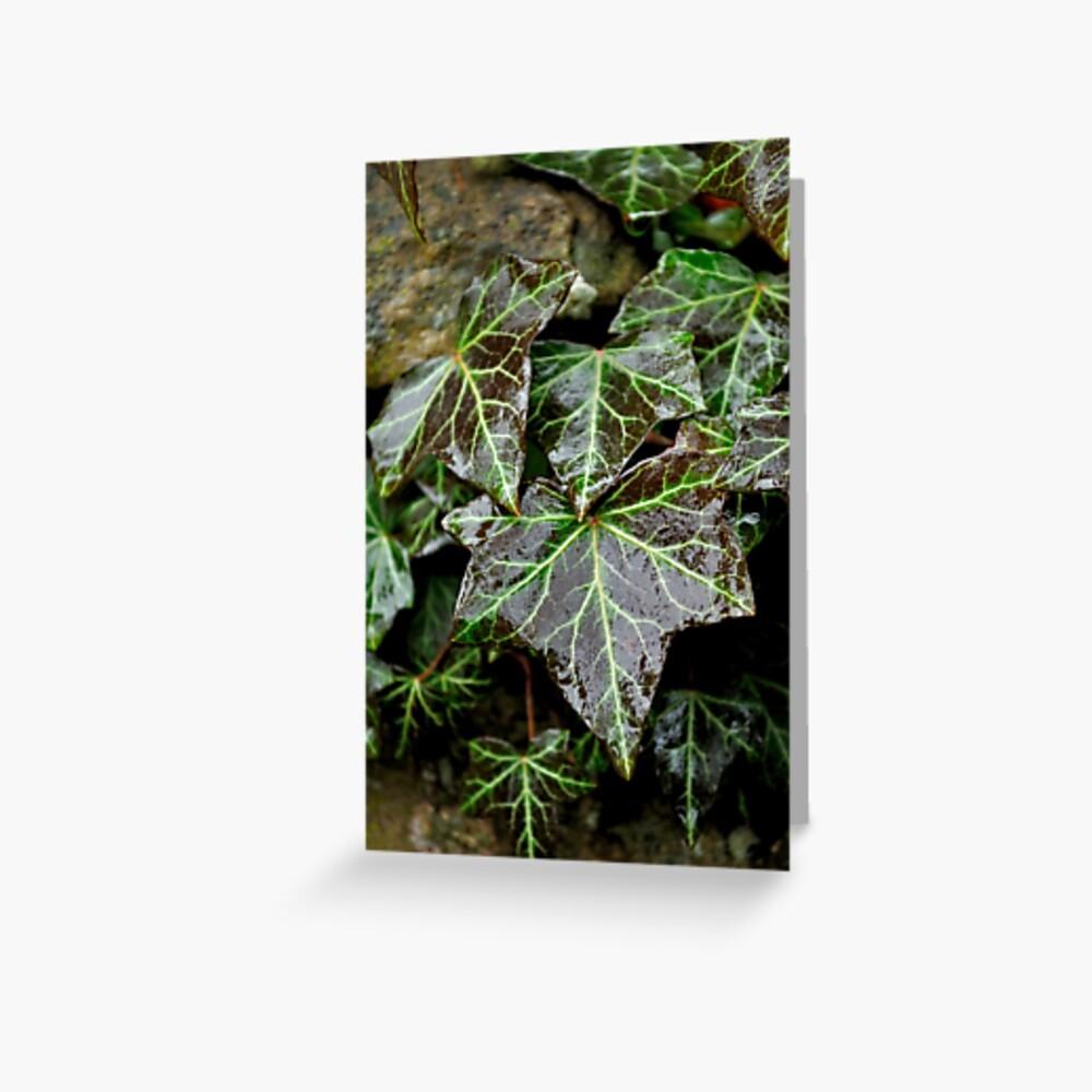 Glistening Ivy Greeting Card