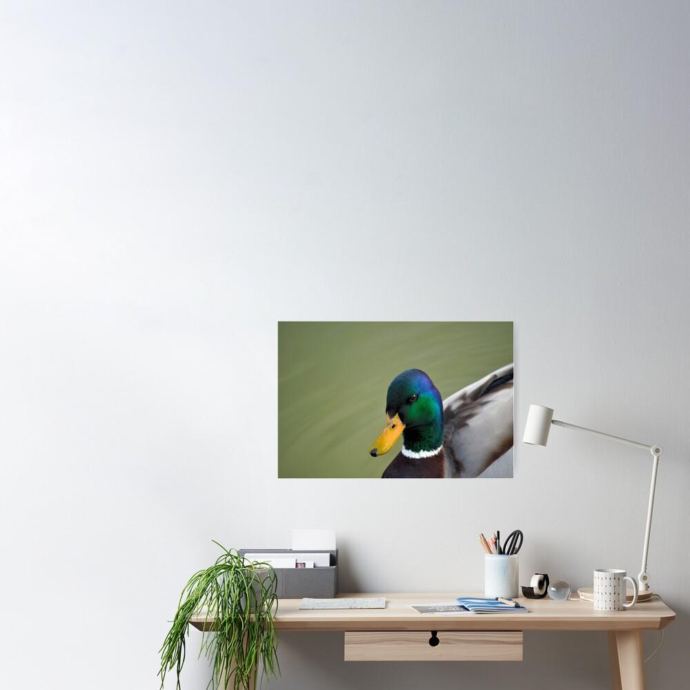 Hello Ducky! Poster
