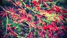 Autumn in Abstract by yolanda