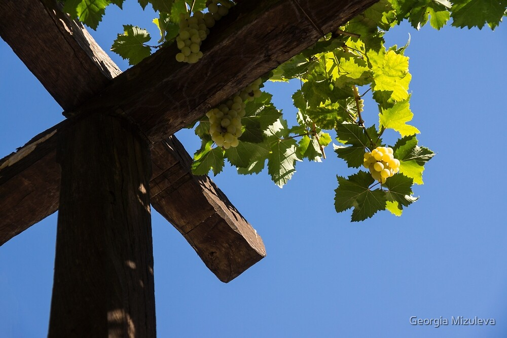 Blue Sky Grape Harvest - Thinking of Fine Wine by Georgia Mizuleva