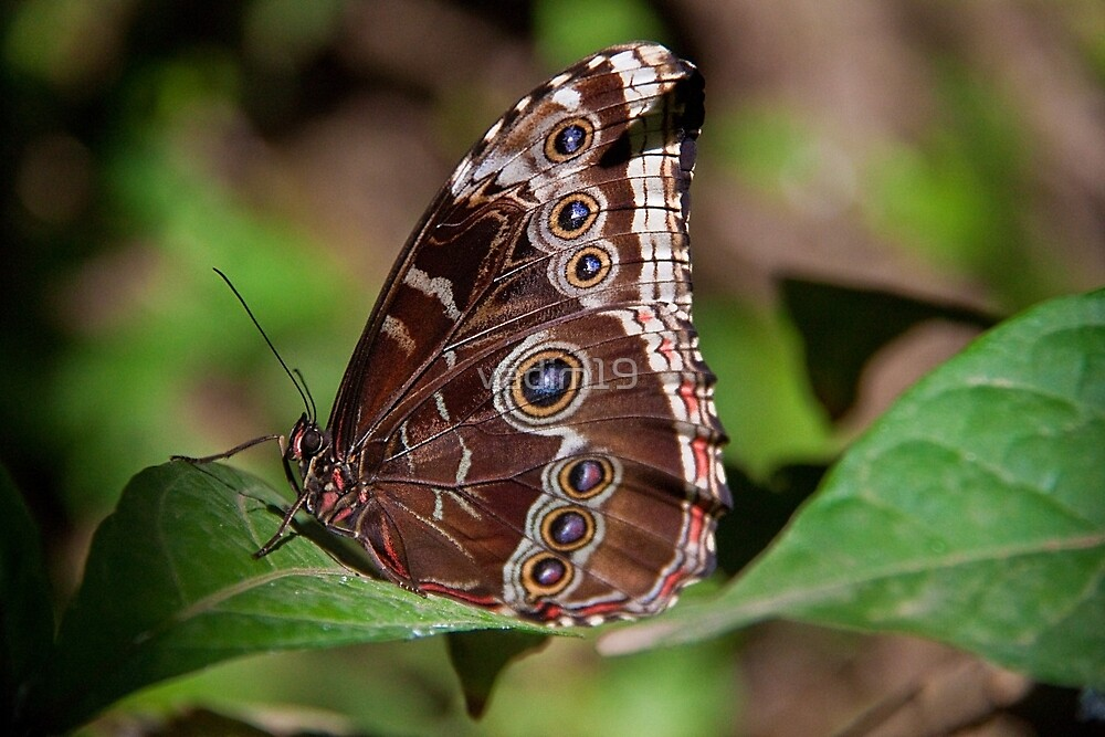 Butterfly. by vadim19