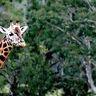 Giraffe No.1 by Erin Davis