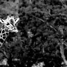 Giraffe No.2 by Erin Davis
