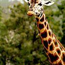 Giraffe No.3 by Erin Davis