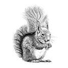 Squirrel Drawing by Nigel Tinlin