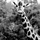 Giraffe No.6 by Erin Davis