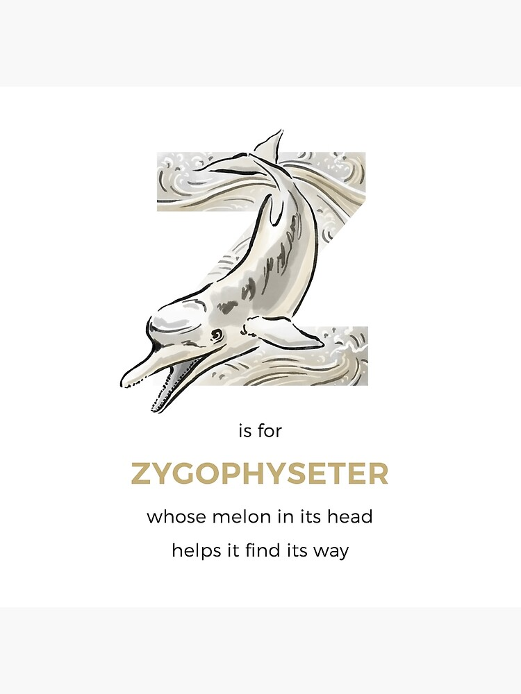 Z is for Zygophyseter by franzanth