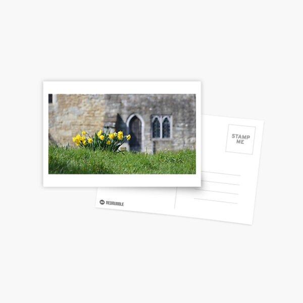 Daffodils, Headcorn Village Postcard