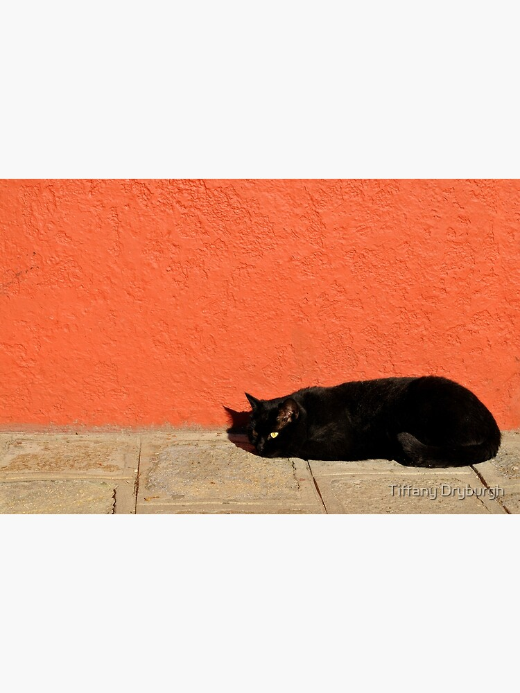 Black Cat Red Wall by Tiffany