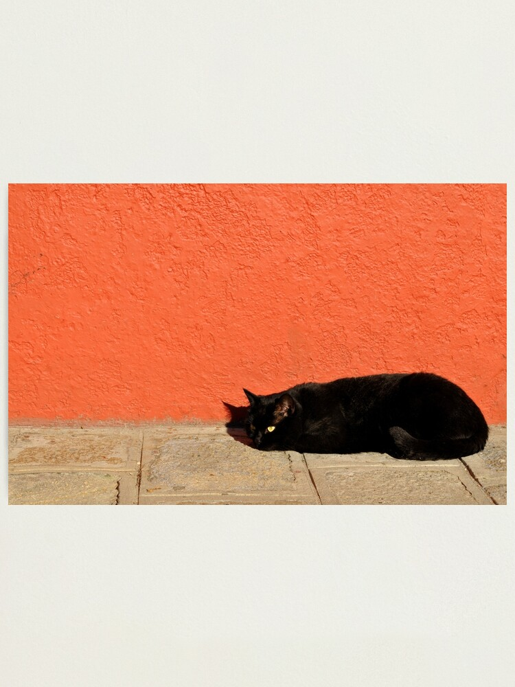Alternate view of Black Cat Red Wall Photographic Print
