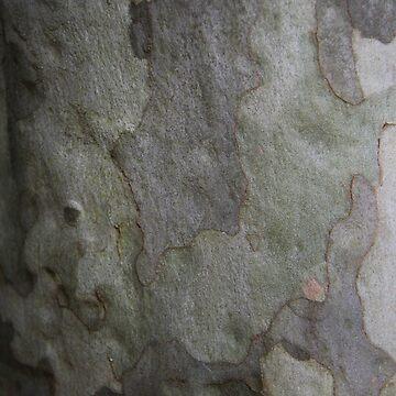 Swaziland Bark 6 by raquelfletcher