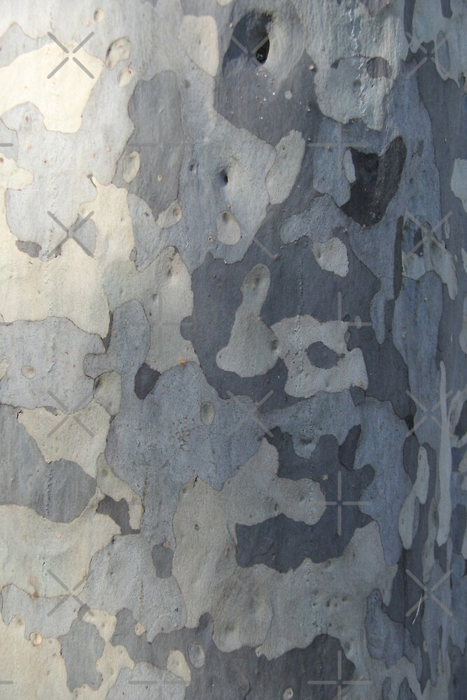 Swaziland Bark 4 by Raquel Fletcher
