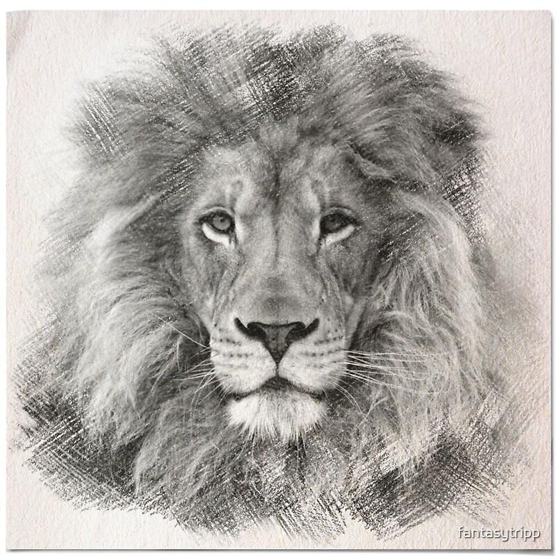 "Sketch Images For Drawing: ""Lion Sketch"" By Fantasytripp"