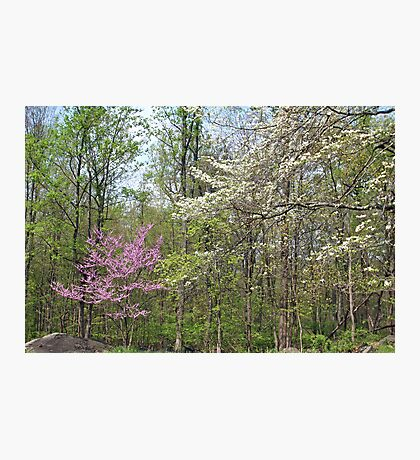 Springtime In The Woods Photographic Print
