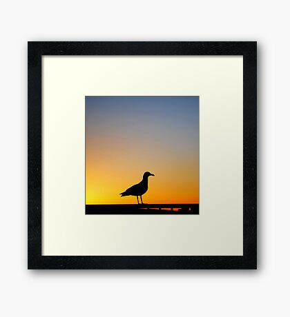 Sea Gull Sunset Framed Print