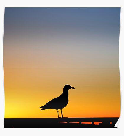 Sea Gull Sunset Poster