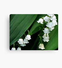 Sweet Simplicity Canvas Print