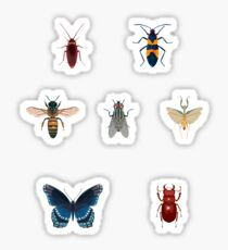Insect Sticker Collection Sticker