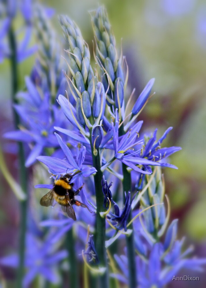 Bee on Blue by AnnDixon