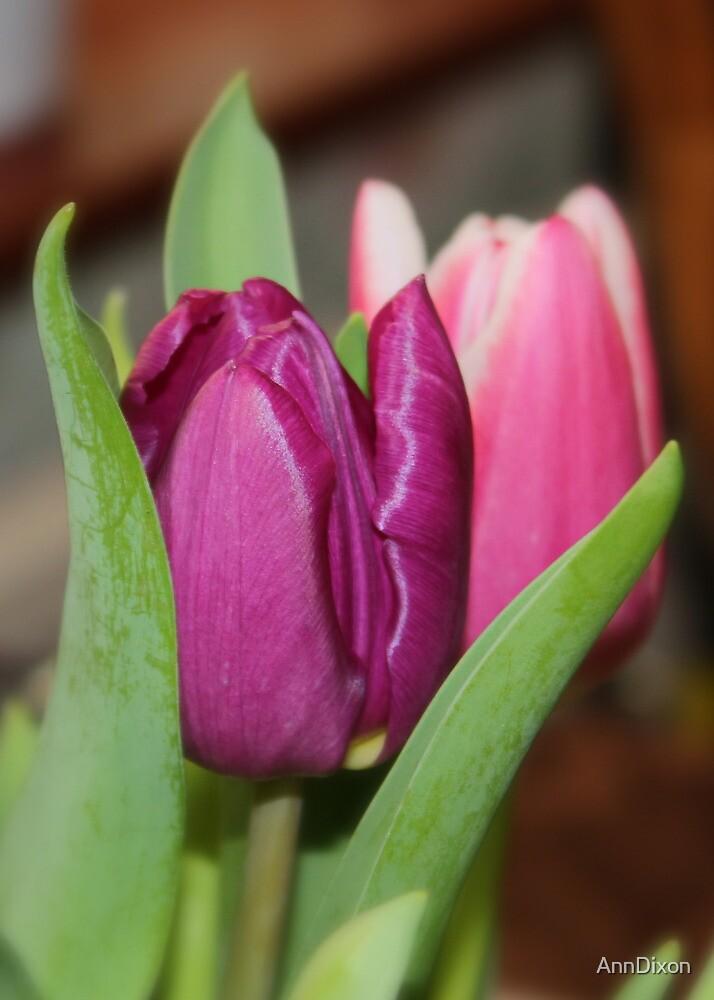 Tulip Hiding by AnnDixon