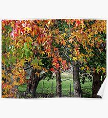 Autumn in Berrima Poster