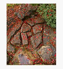 Patchwork Pavers  Photographic Print