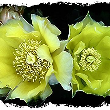 Cactus Flowers Photo Art by NEKphotoart