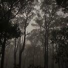 Sentinels in the mist  by Tamarama72