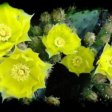 Cactus Flower Cluster Photo Art by NEKphotoart