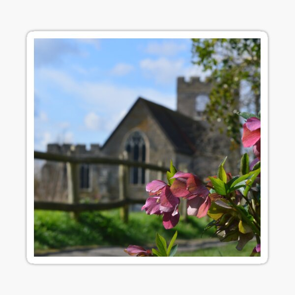 Spring Hellebores at Church Walk Sticker