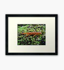 Silly Salamander Framed Print