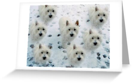 Cute Westies West Highland White Terriers Birthday Christmas