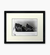 Tiny Kittens Framed Print