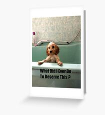 Cockapoo in the Bath Greeting Card