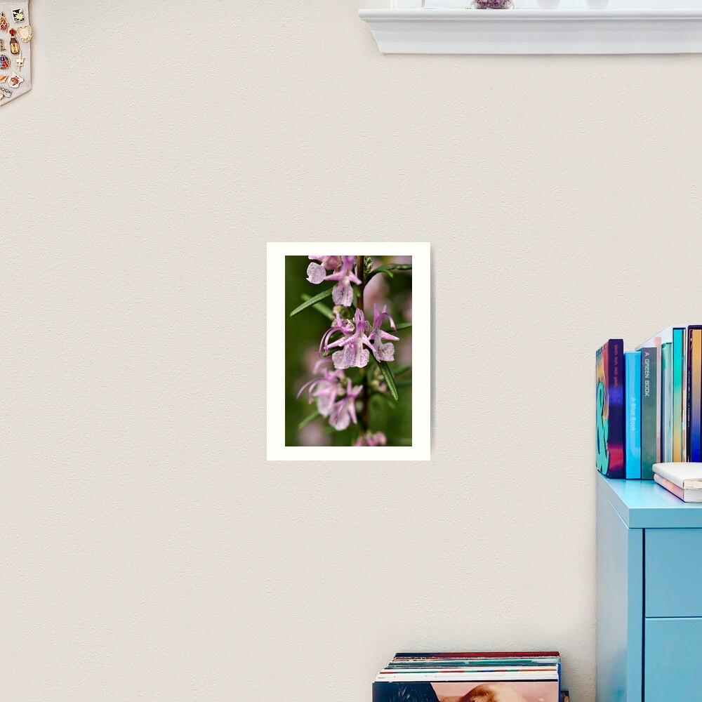 Rosemary Blooms Art Print