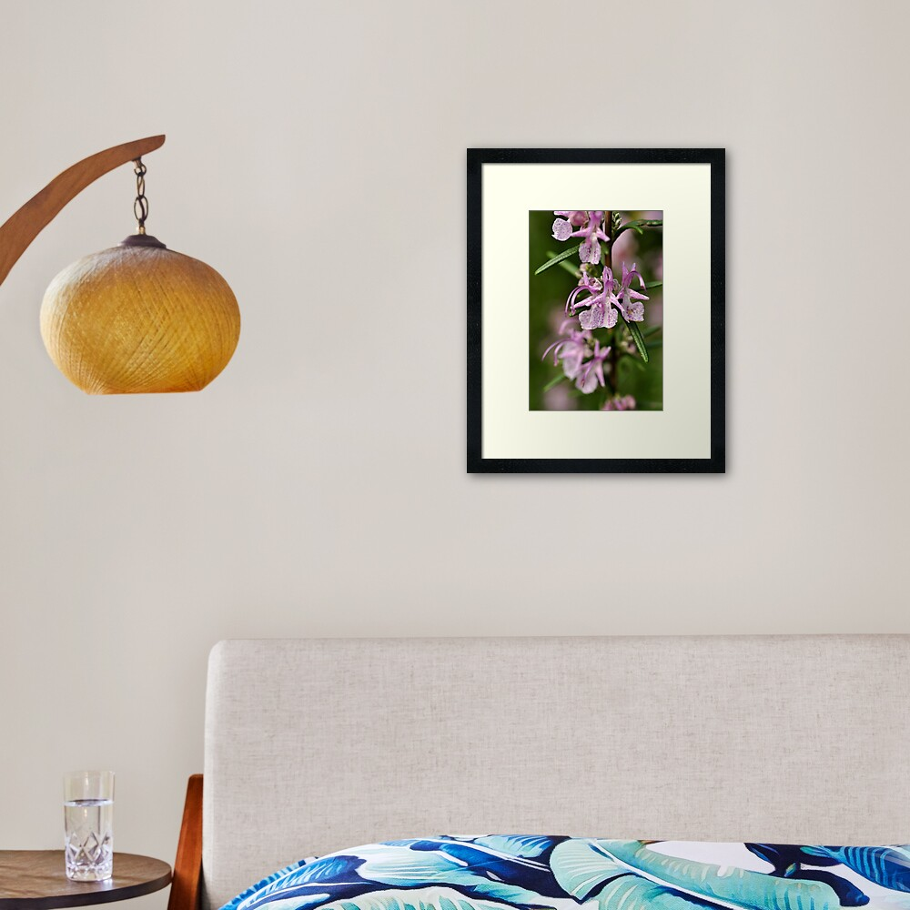 Rosemary Blooms Framed Art Print