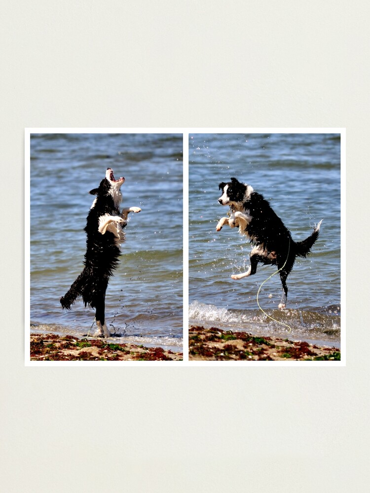 Alternate view of The All Singing, All Dancing Wonder Dog! Photographic Print