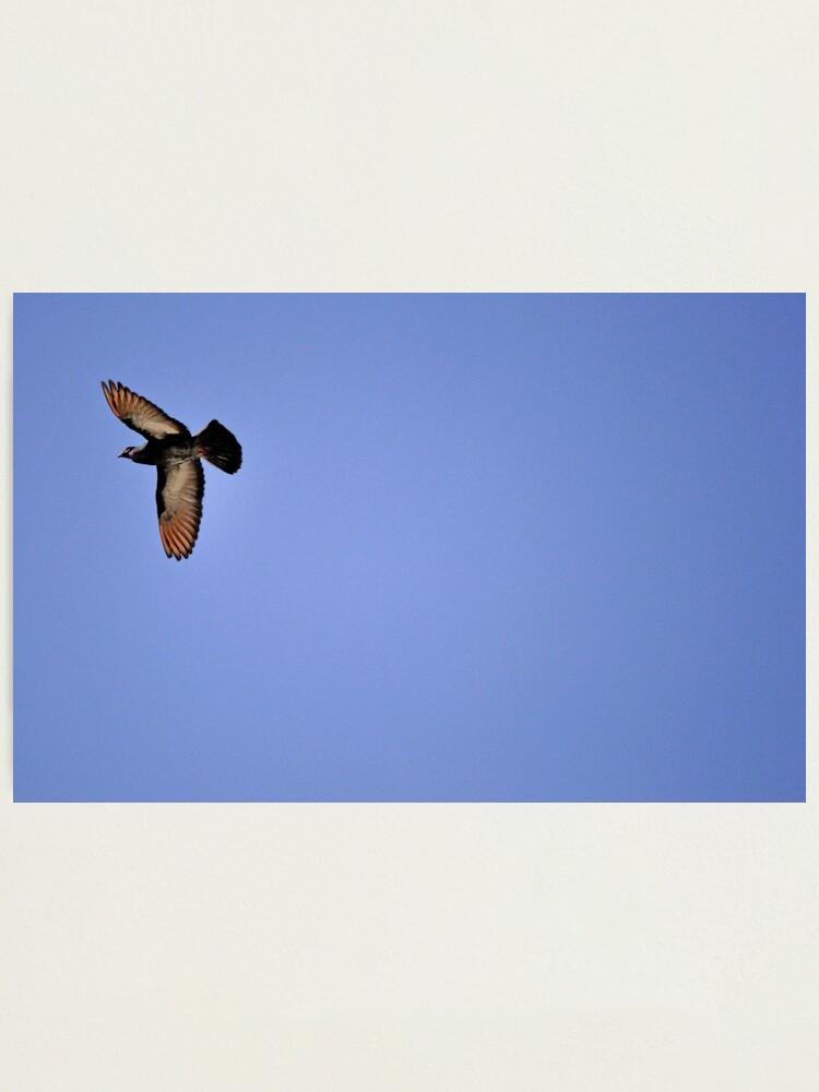 Alternate view of Free Wheelin' Photographic Print